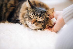 猫の無痛気功ヒーリング治療