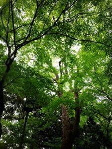 八尾 癒し 木 天使の虹