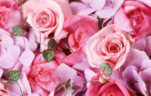 Pink Rose大阪の薔薇イメージ画像です。